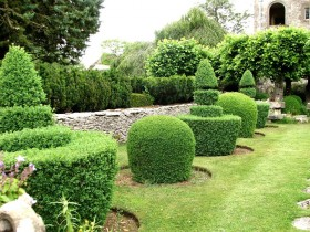 Suburban area with topiary plants