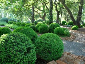 Topiary landshaft dizayni