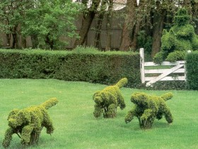 Topiary dog