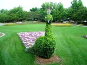 Topiary qush