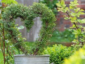 Simple topiary in the shape of a heart
