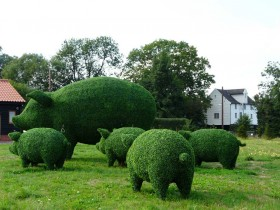 Красивый топиари в саду
