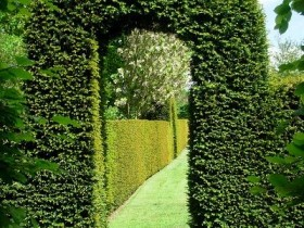 Arch topiary