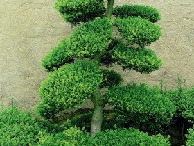 Bog'da chiroyli daraxt topiary