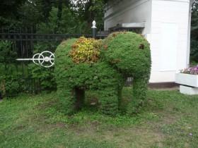 Топиари ў выглядзе слана
