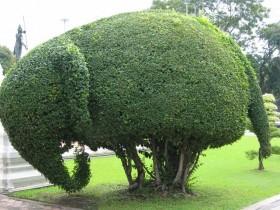 Куст в виде слона