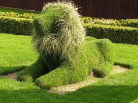 Topiary in the form of a lion