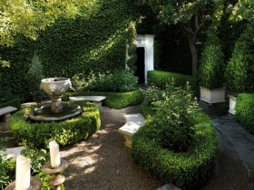 Topiary plants in the garden