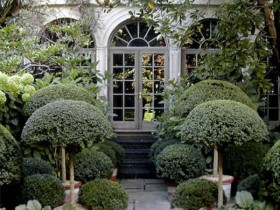 Topiary for the porch garden