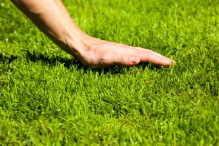 Идеально ровный газон - залог привлекательности садового участка