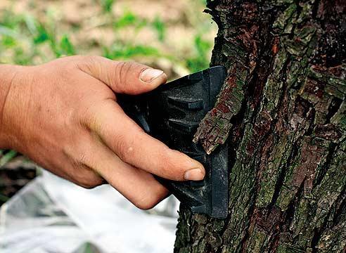 """""""Пилинг"""" дерева"""
