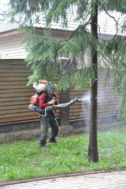Уход за деревом - залог эффективного роста растений