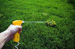 Химическая борьба с сорняками на газоне