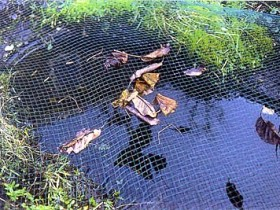 Chicken wire is for cleaning the pond