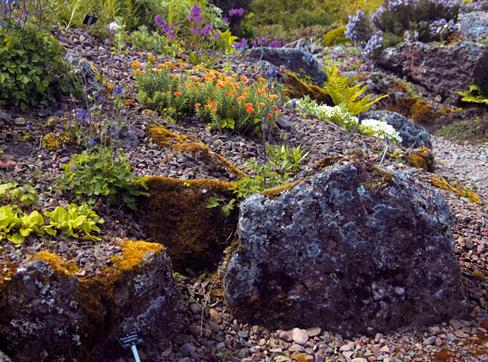 Растения для укрепления склонов