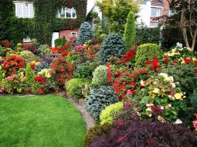The decoration of lawn, ornamental shrubs