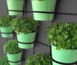 вертикальное озеленение с помощью ампельных растени