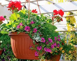 Преимущества озеленения с помощью ампельных растений