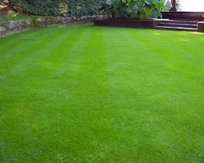An overview of the most popular types of lawn – lawns and photos