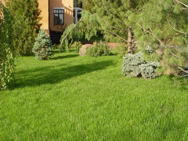 Обыкновенный (садово-парковый) газон