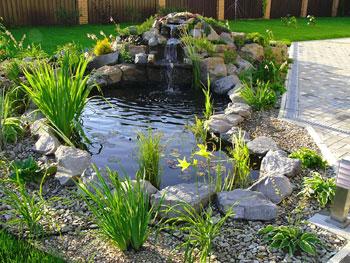 Украшение пруда водными растениями