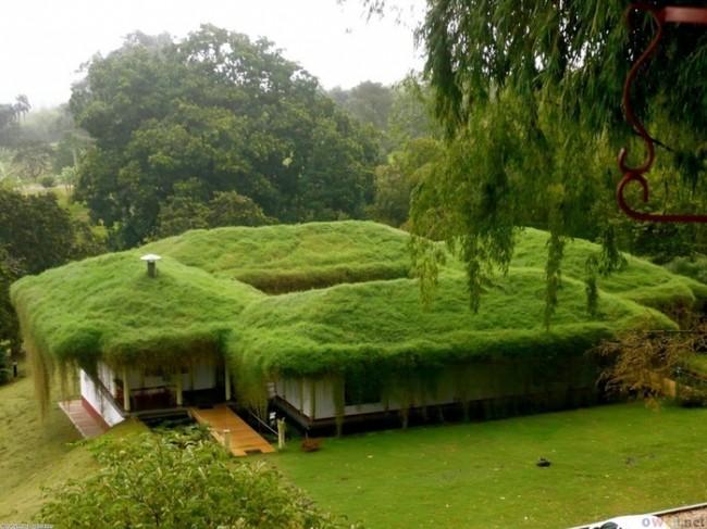 Озеленение кровли постройки